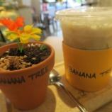 『【シンガポール】韓国で話題のbanana treeの植木鉢に入ったプリン』の画像