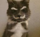 猫のヒゲ、実はあまり役に立ってなかった
