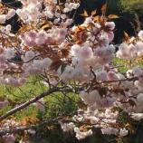 『春の竹田方面ドライブ、その3「沈堕の滝」』の画像