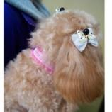 『ワンランク上のおしゃれを目指して  スタッフ手作り犬用リボン 110円』の画像
