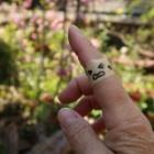 『切れ味鋭いノコギリ【Silky ゴム太郎】でやっと片付いた枯れ枝の山』の画像