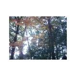 『奥山にもみじ踏み分け鳴く鹿の〜』の画像