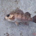 tabe's Fishing blog