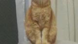 【画像ばり】猫の証明写真撮ったったったったたた