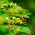 20210911 大和川で見たその他の昆虫たち
