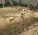 ps2っぽい犬が発見される