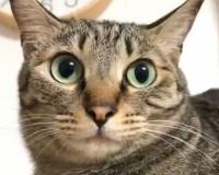 【悲報】ネッコん、瞳孔が開くwwwwwwwwwwwwwwwwww