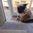 愛猫「塩対応ならまかせるニャ!」と、迷惑電話をみごとに撃退してくれる