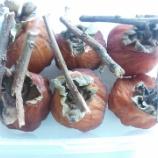 『貸し農園(市民農園)で収穫した渋柿を使い、干し柿が完成!』の画像