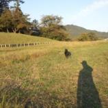 『散歩』の画像