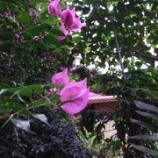 『流石に沖縄は暖かい。』の画像