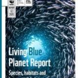 『たったの40年で海洋生物が半減』の画像