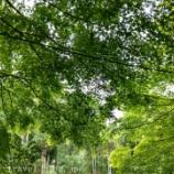 『京都旅行記3 上を向いて歩こう、嵐山の緑の芸術「竹林の小径」』の画像
