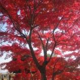 『岐阜県養老公園の紅葉』の画像