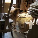 『犬たちと椅子作り』の画像