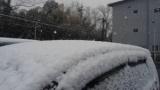 わい(さすがに雪降ってたらスーパー並んでないやろ…)