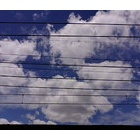 『台風一過の青い空・・・』の画像