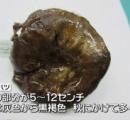 【内臓?】毒キノコの「ニセクロハツ」を食べた75歳男性、1週間苦しんで死亡(画像あり)