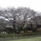 『3月の東大和④』の画像