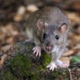 『四摂事(ししょうじ):ネズミの恩返し』の画像