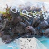 『国東の食環境(359)ブラックビート』の画像