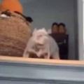 イヌが階段の上にいた。ご主人が帰ってきたぁ! → こうなります…