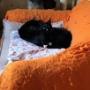 個性豊かな3匹の黒猫ファミリー