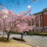 『00635-190313 名古屋市政資料館の桜が満開』の画像