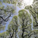 『木にも忖度』の画像