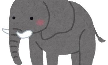 人間に密猟されて牙を獲られ続けた象さん。まさかの進化!!!