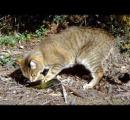 野良ネコが増え続けるオーストラリアで「1世帯2匹まで」のネコ規制条例 去勢措置や近隣住民の許可も必要