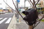 『グローブ』忘れてますよ!~梅が枝団地の交差点のところ~