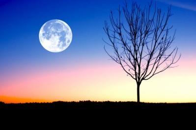 お月見 意味 由来 ホロスコープ