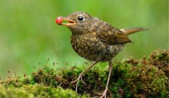 鳥とかいう超ハイスペックな生き物wwwwwwwww
