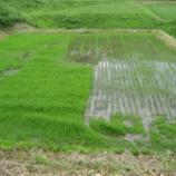 『雑草との戦いです』の画像