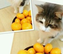 『【新ハロ猫】カントリー・ガールズ山木さんと小関ちゃんの猫画像きたぞ』の画像