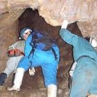 『鍾乳洞のコウモリ』の画像