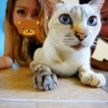 『【タイ猫 ベスト5】また会いたいタイの思い出猫ちゃん』の画像