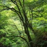 『美しい森2』の画像
