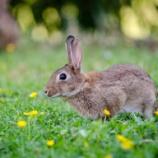 『飼ってたウサギが死んじゃった』の画像
