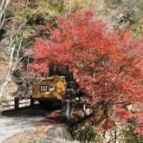 『秋真っ盛り』の画像