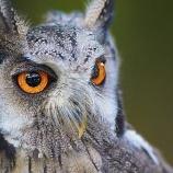 『鳥は頭がいい』の画像