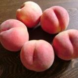 『初桃』の画像