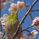 『【写真】 鳥たち @ WX500』の画像