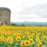 『心躍る🎶ひまわり見るなら【なぎさ第1公園(滋賀県守山市)】ですね。その後に【スイス】で美味しいハンバーグはいかが。』の画像