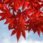 『有馬の紅葉見物。』の画像