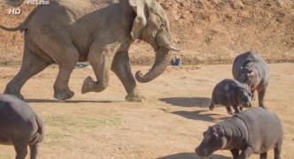 カバ「俺っちアフリカで最も危険な動物だからさ〜w」 ゾウ「シュババババッ」(走ってくる音)