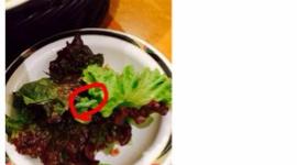 ステーキけん辻堂店のサラダに芋虫が混入