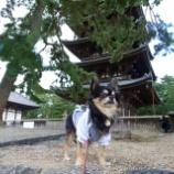 『C'festa(シェフェスタ)奈良に行って来ました☆』の画像