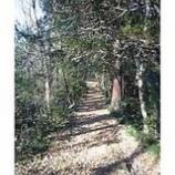 『丘登り』の画像